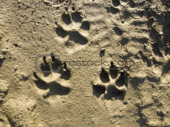 Traces of a dog