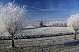 A stunning view of frozen fog on windmill and trees