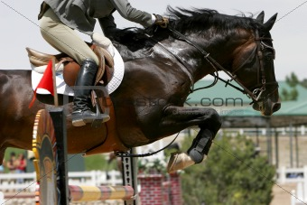 Equestrian Show Jumping Close-up