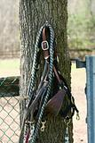 Horse bridel and rope on a tree