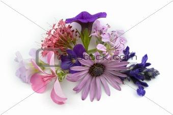 floral background design element