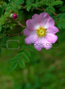 Beautiful flower on a background leaves