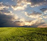 Wheat field under dark clouds