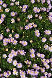 Bee on flowers arangement detail