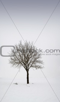 Single tree in field during winter 1