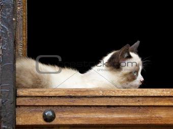 A cat lying in a wooden door frame