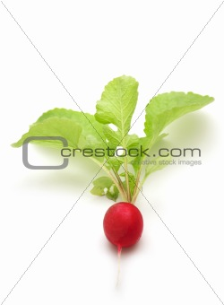 fresh radish on white background