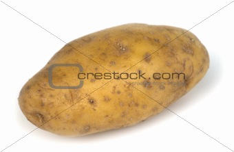 one potato on white background