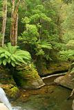 Liffey Gorge, Tasmania.