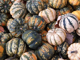 Assortment of multicolor squash - pumkins.