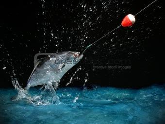 Catching a big fish at night