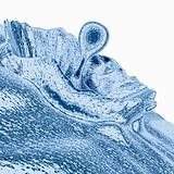 Liquid Splash - Blue