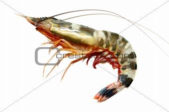 One prawn