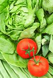 two tomatoes on greens background