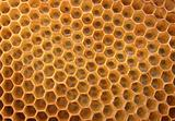 honey texture