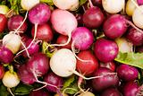 Colorful Radishes