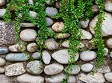 rock wall and green plant