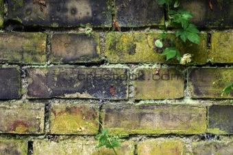 Old garden wall
