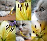 Collage - a kitten and flowers.