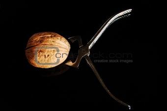Tough Nut