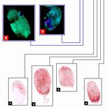 Fingerprints comparison