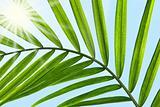 Palm leaf against a sunny blue sky