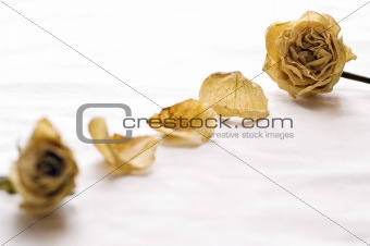 Dry Roses