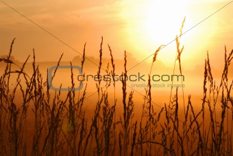 sunrise in a wheat field