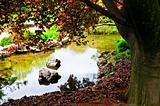 Pond in zen garden