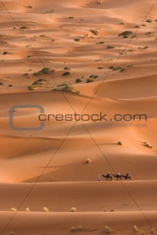Camels caravan heading across the sahara