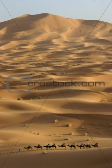 Camel trek across the Sahara