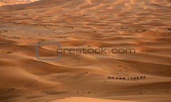 Camel adventure