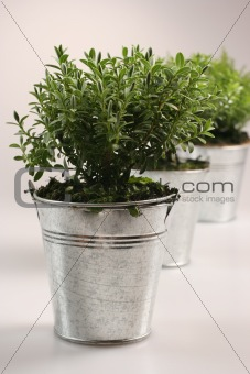 Small green plants in silver flower pot
