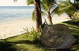 shady hammock