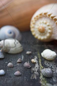 Sea shell selections