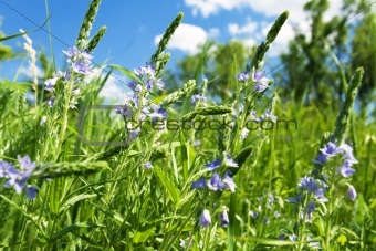 delicate wildflowers