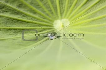 Waterdrop on a green leaf