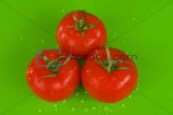 Three tomatoes on green
