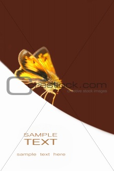 Small butterfly on white surface