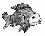 Fish Drawing