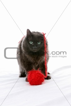 black cat and red yarn