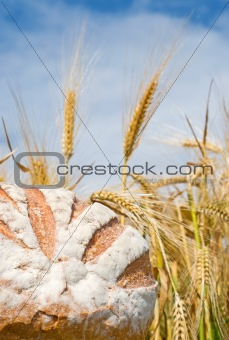 fresh bread o nature background