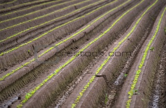 ploughed field in summer