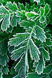 Frosty plants in late fall