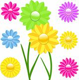 Daisy flower vector illustration