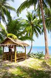 palms and hut
