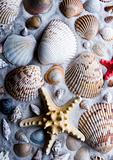Shells