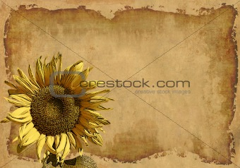 Grunge background with a sunflower
