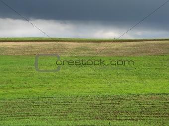 green field after rain