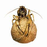 crayfish on coconut